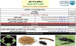 الحشرات كمصدر للبروتين